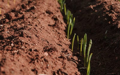 Soil Improvement with Recycled Organics in Broadacre Farming