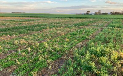 SAGIT-funded pastures demonstration trial for Murray Plains